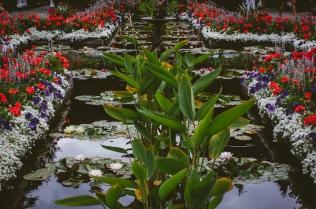 butchart-gardens-64