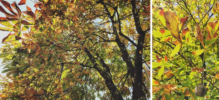 fall-foliage-2016-01
