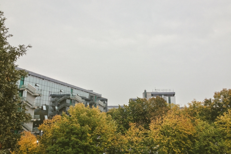 fall-foliage-2016-08