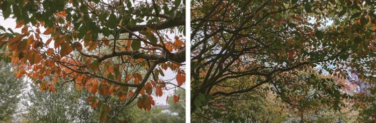 fall-foliage-2016-09