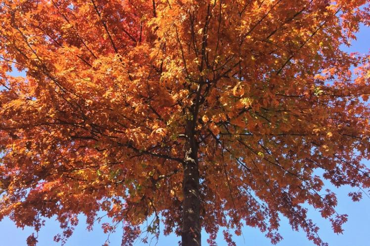fall-foliage-2016-10