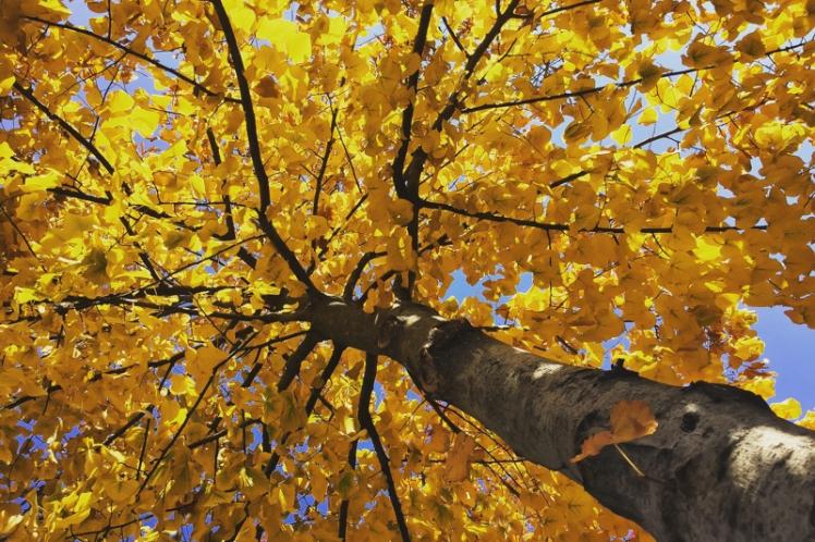 fall-foliage-2016-12