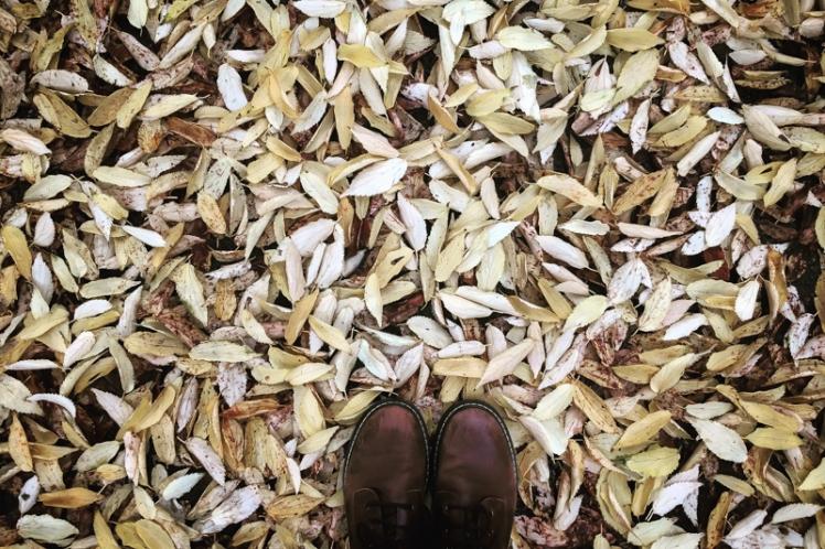 fall-foliage-2016-15
