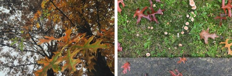 fall-foliage-2016-16