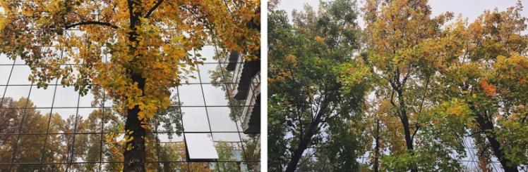 fall-foliage-2016-18