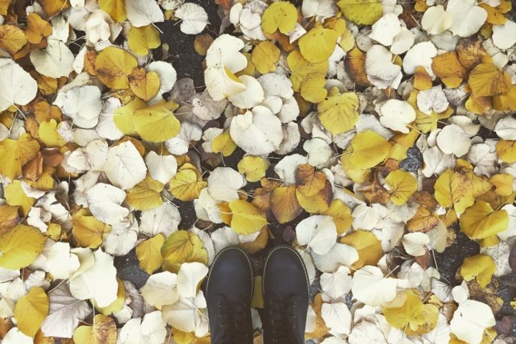 fall-foliage-2016-20