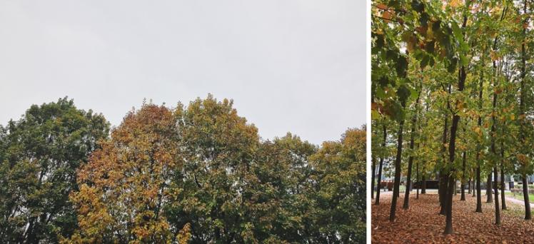 fall-foliage-2016-22