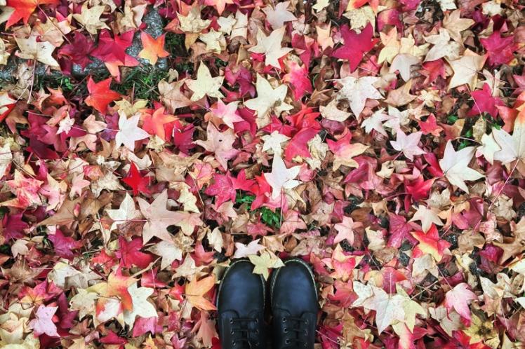 fall-foliage-2016-24