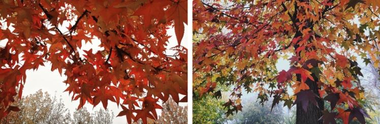 fall-foliage-2016-25
