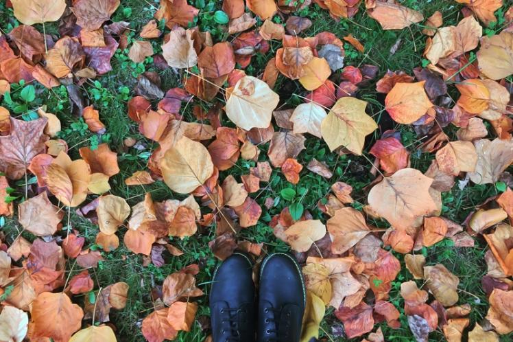 fall-foliage-2016-26