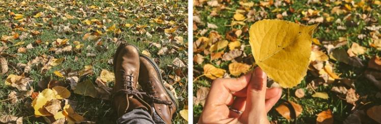 fall-foliage-2016-31