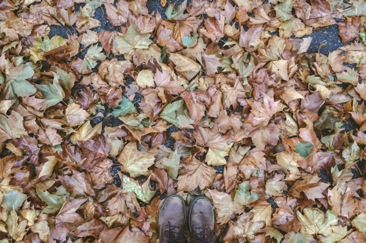 fall-foliage-2016-35