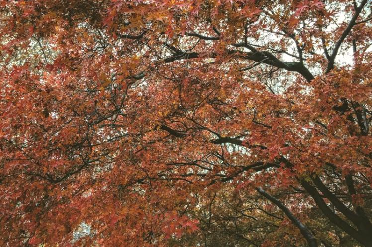 fall-foliage-2016-36