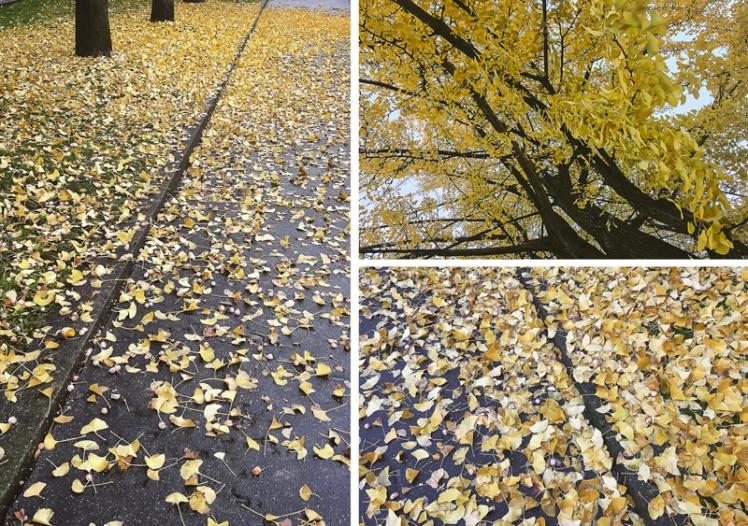 fall-foliage-2016-39