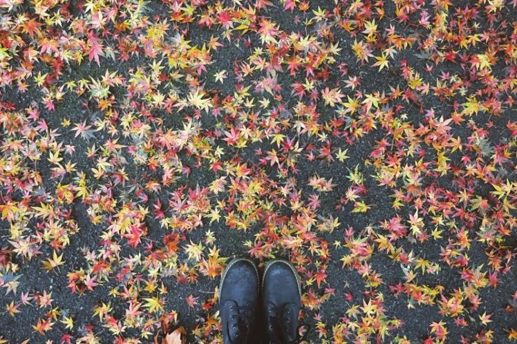 fall-foliage-2016-40
