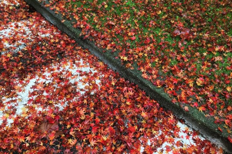 fall-foliage-2016-43