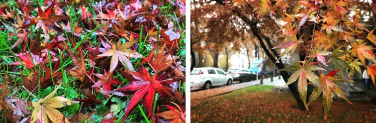 fall-foliage-2016-44