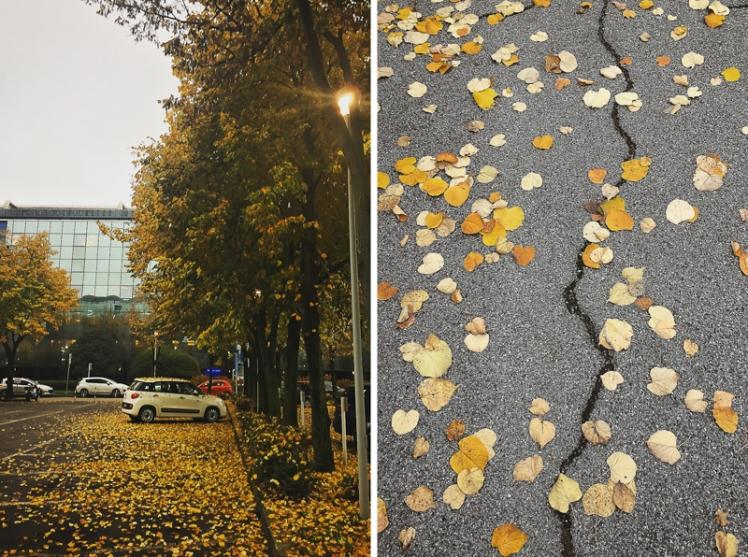 fall-foliage-2016-45