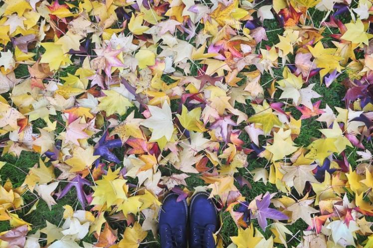 fall-foliage-2016-46