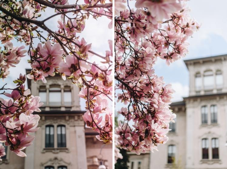 magnolie-2018-01