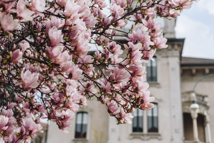 magnolie-2018-02
