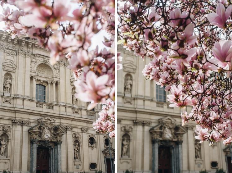 magnolie-2018-03