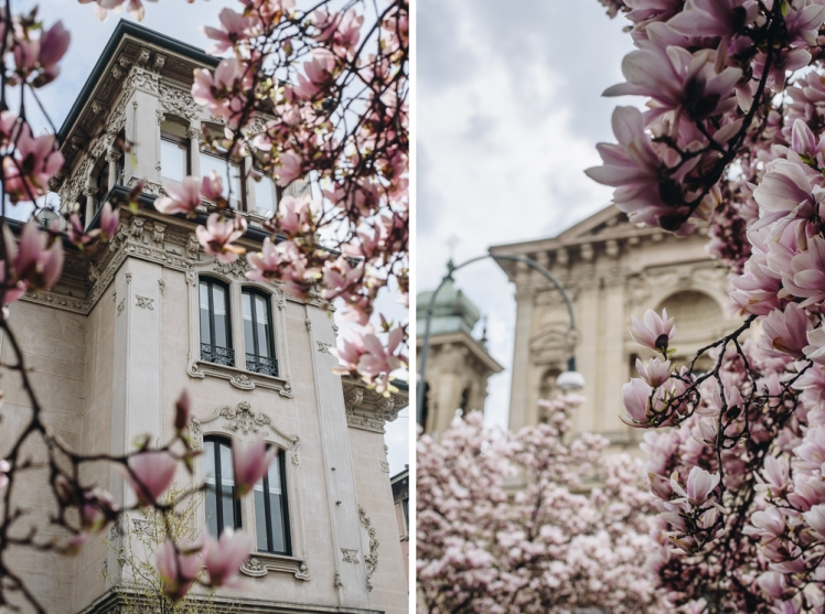 magnolie-2018-04
