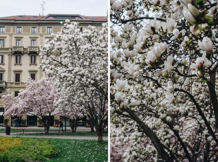 magnolie-2018-05