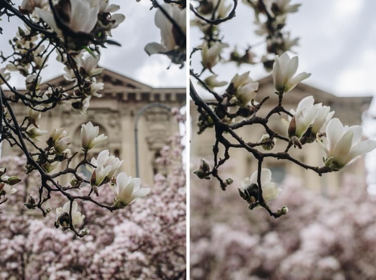 magnolie-2018-07
