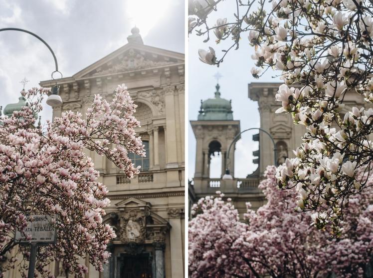 magnolie-2018-10