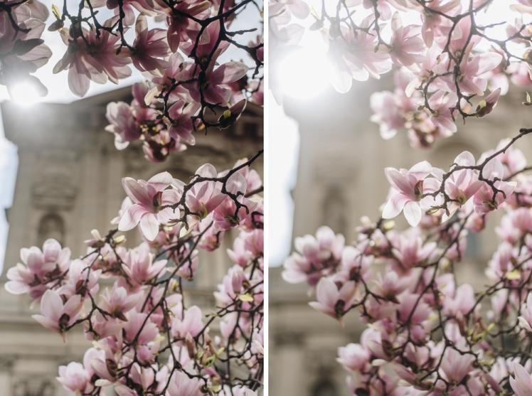 magnolie-2018-12
