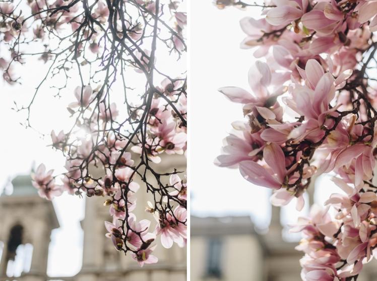 magnolie-2018-13