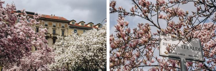magnolie-2018-14