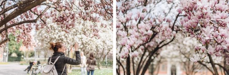 magnolie-2018-16