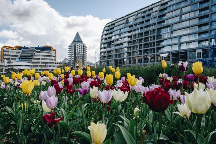 rotterdam-2017-07