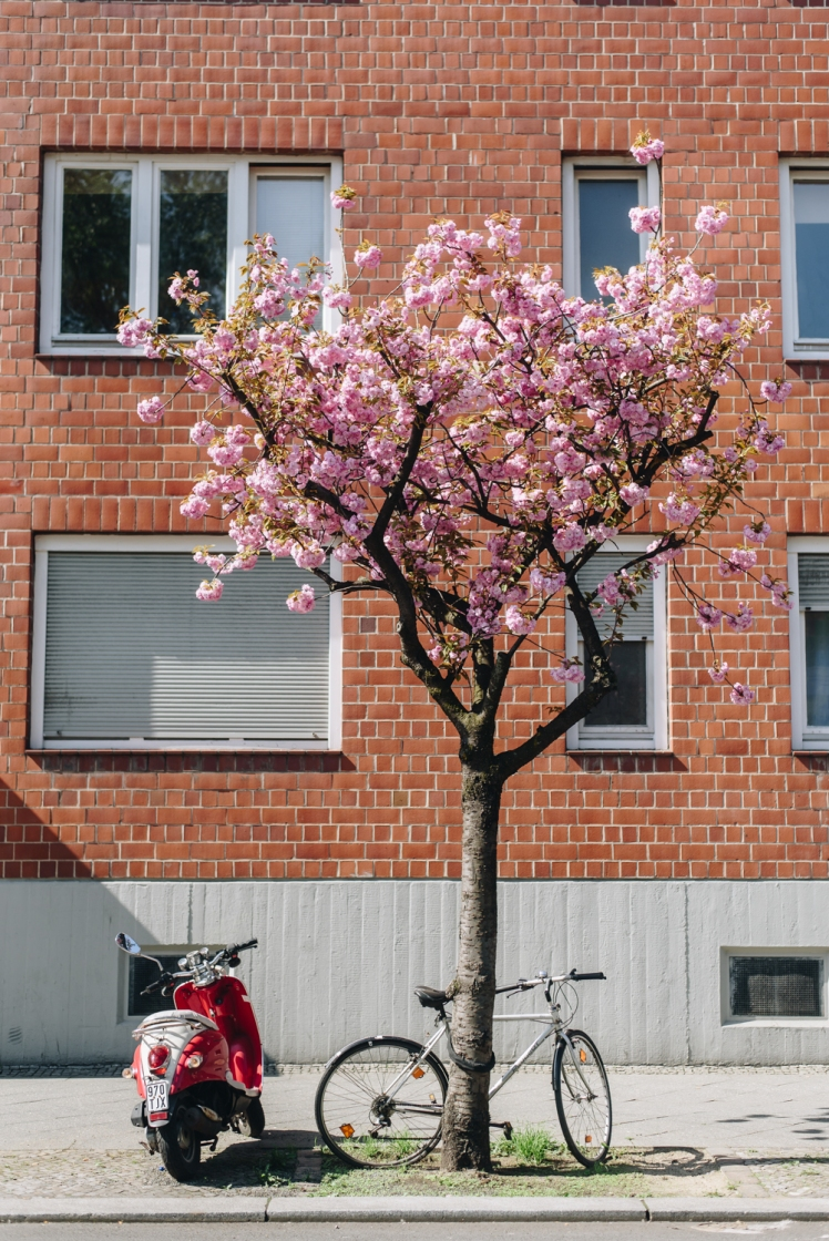 berlin-spring2018-04