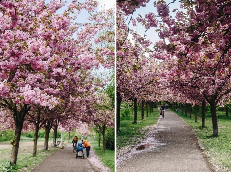 berlin-spring2018-21