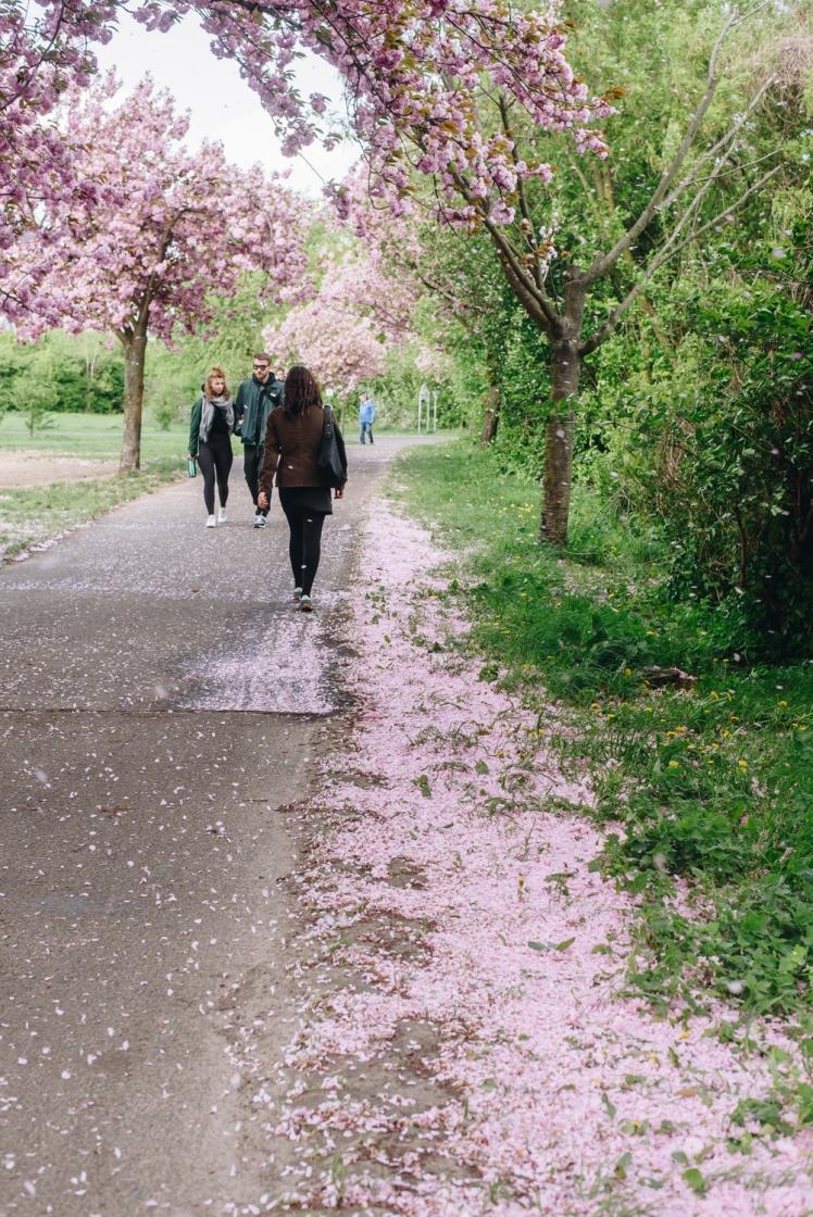 berlin-spring2018-22