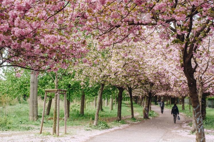 berlin-spring2018-30
