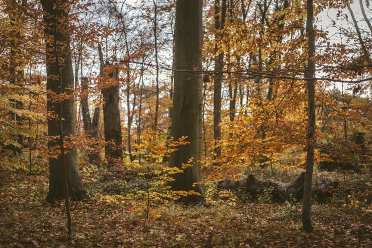 berlin-fall-2018-107
