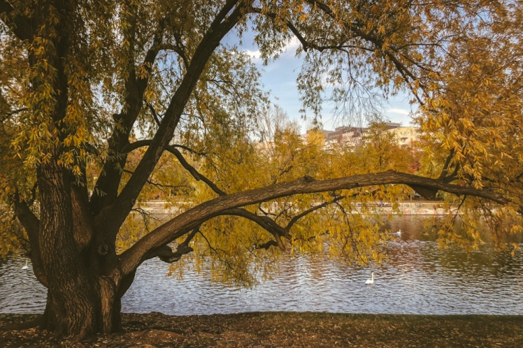 berlin-fall-2018-123