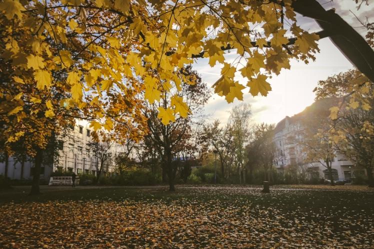 berlin-fall-2018-124