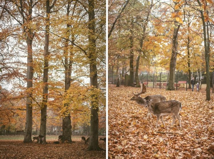 berlin-fall-2018-77