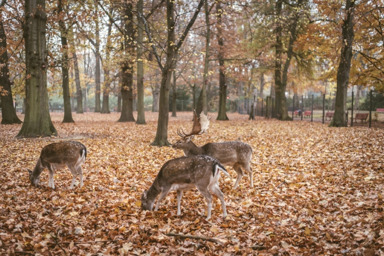 berlin-fall-2018-78